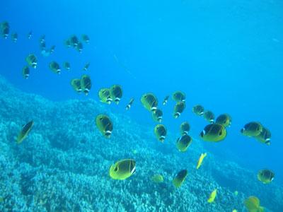 butterflyfish.jpg