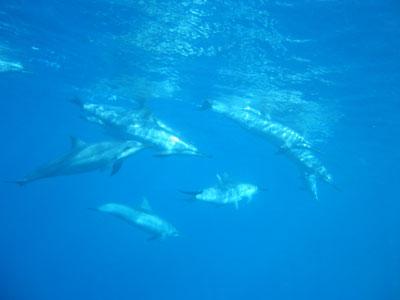 dolphin121601.jpg