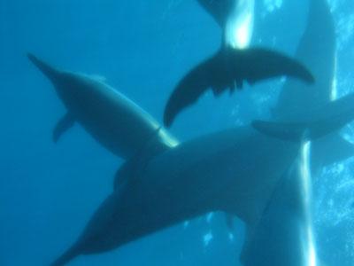 houkena_dolphin02.jpg