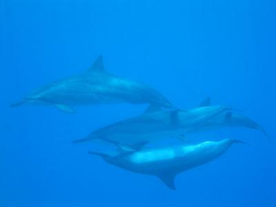 houkena_dolphin04.jpg