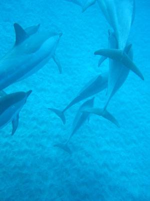 houkena_dolphin06.jpg