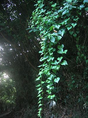 maedagawa02.jpg