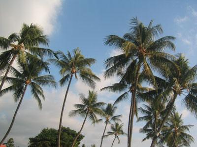 palmtree0601.jpg
