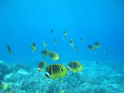 underwater02.jpg